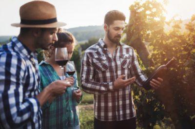 Visite d'un domaine viticole
