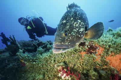 Plongée ou snorkeling aux îles Lavezzi