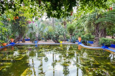 Visite du Jardin Majorelle