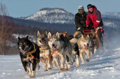 Randonnée avec chiens de traîneau