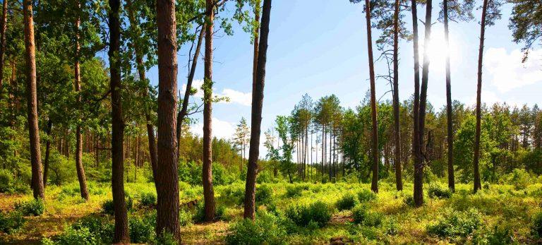 Séminaire éco-responsable - Séminaire au vert - Séminaire nature
