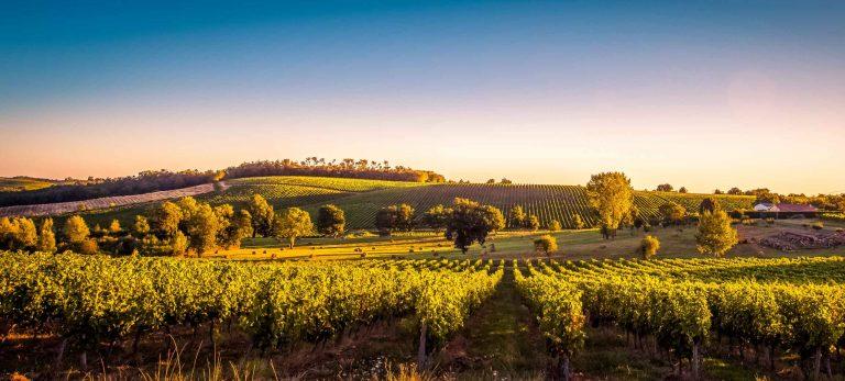 <strong>Vignobles du bordelais</strong>