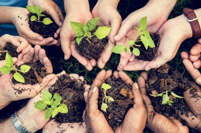 Team building Nature avec reforestation