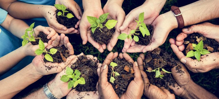 <strong>Contribution à la reforestation</strong>