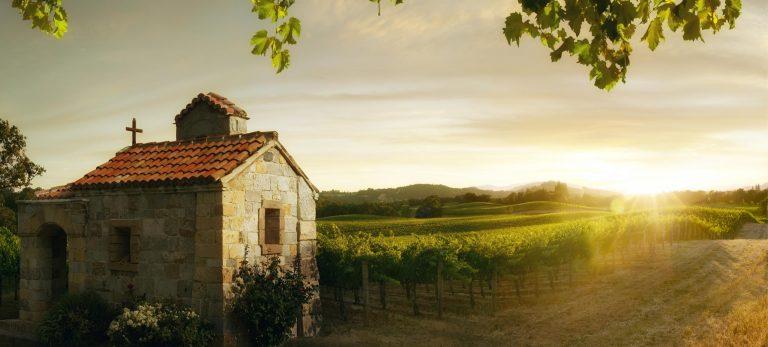 <strong>Les vignes du Beaujolais</strong>