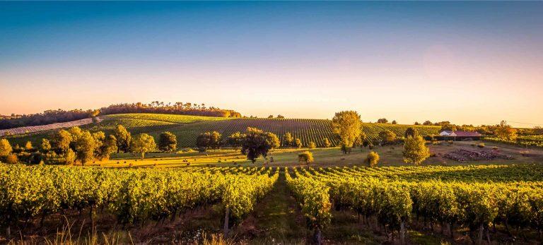 <strong>Le Vignoble de Bordeaux</strong>