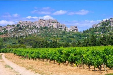 Visite d'un vignoble et cours d'œnologie