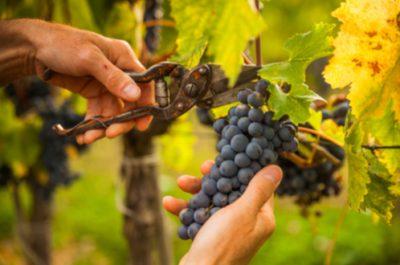 Visite d'un vignoble avec dégustation